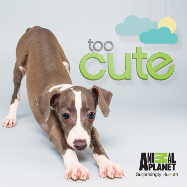 Dog-Show-Too-Cute