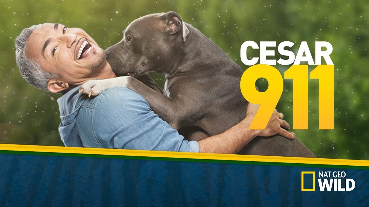 Dog-Show-Cesar-911